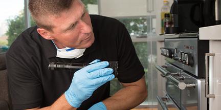 Pest survey before fumigation