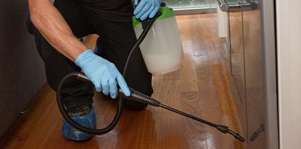 Pest controller treating crawling pests