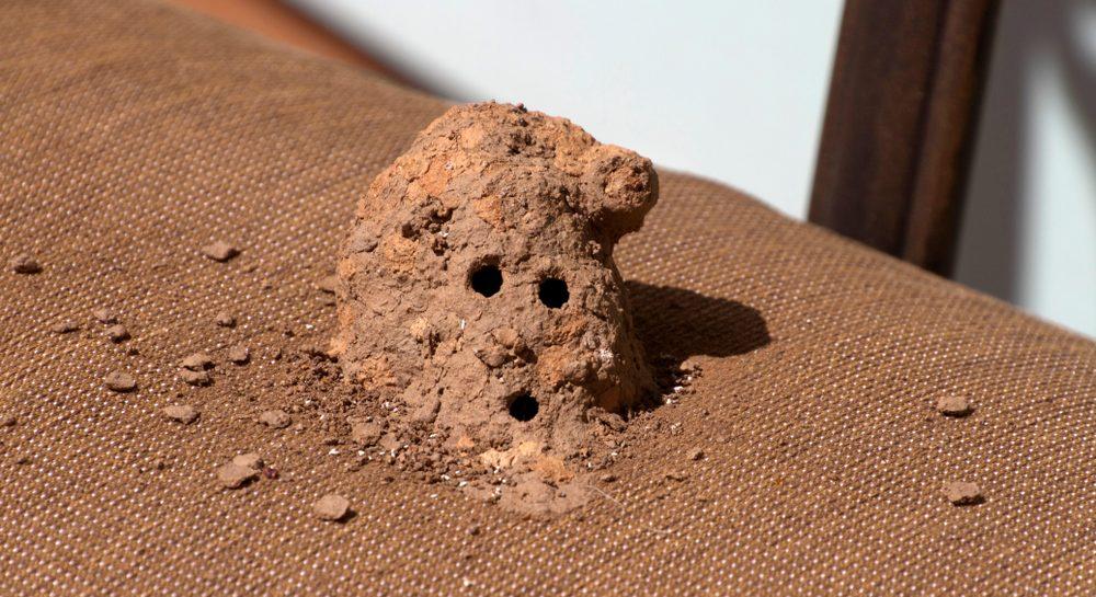 Mud-dauber wasp nest